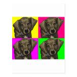 Dachshund Bright Dog Collage Post Cards