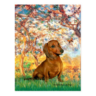 Dachshund (brown1) - Spring Postcard