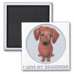 Dachshund (Brown) Granddog Imanes Para Frigoríficos