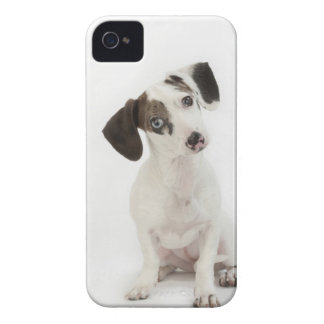 Dachshund/Chihuahua female puppy Case-Mate iPhone 4 Case