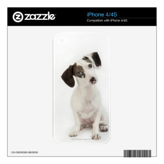 Dachshund/Chihuahua female puppy iPhone 4 Decals