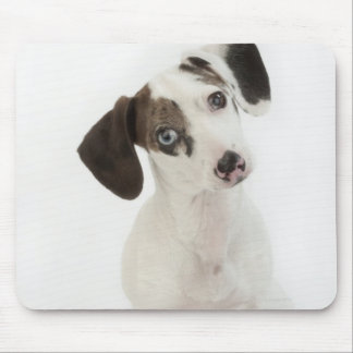 Dachshund/Chihuahua female puppy Mouse Pad