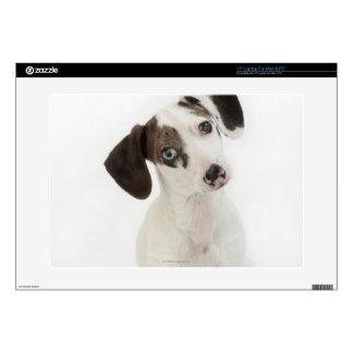 "Dachshund/Chihuahua female puppy staring 15"" Laptop Skin"