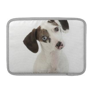 Dachshund/Chihuahua female puppy staring MacBook Sleeve