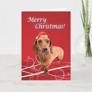 Dachshund Christmas Card card