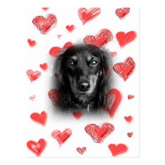 Dachshund con los corazones rojos postales
