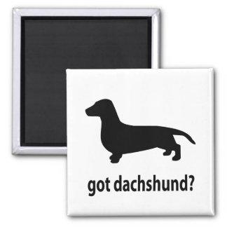 Dachshund conseguido imán cuadrado