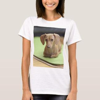 dachshund cream T-Shirt