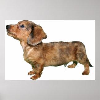 Dachshund Dapple Longcoat Pup Print