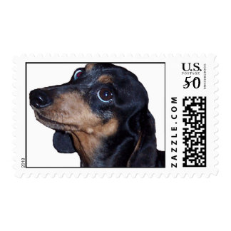 Dachshund Dapple Smoothcoat Postage