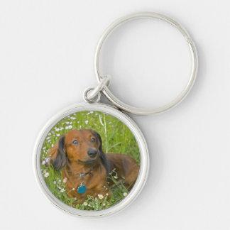 dachshund de pelo largo llaveros personalizados