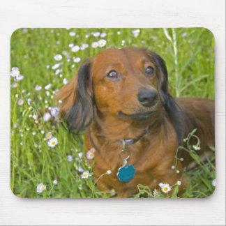 dachshund de pelo largo mouse pad