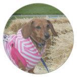 Dachshund dog decorative plate