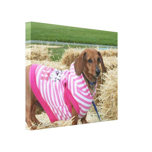 Dachshund dog gallery wrap canvas print