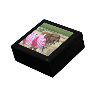 Dachshund dog Gift Box