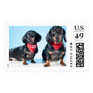 Dachshund Dogs Postage Stamps