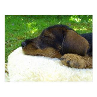 Dachshund dulce del bebé, perrito el dormir postales