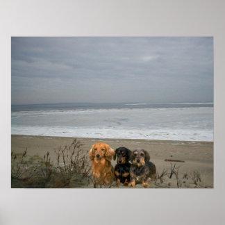 Dachshund en el poster de la playa