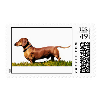 Dachshund estándar grande sellos postales