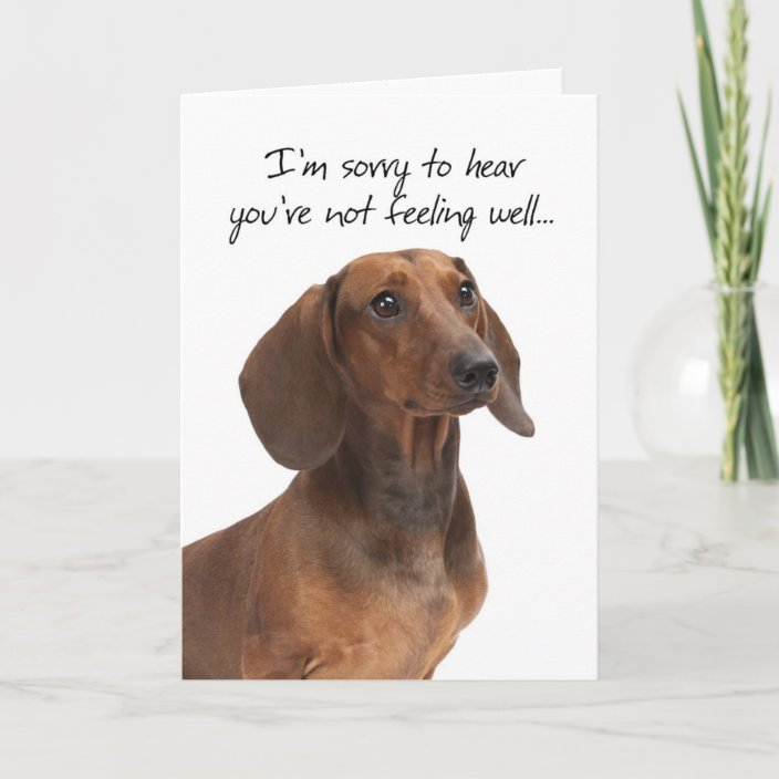 Dachshund Get Well Card Zazzle Com