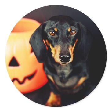 Halloween Themed Dachshund Halloween Classic Round Sticker