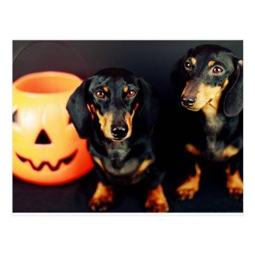 Halloween Themed Dachshund Halloween Postcard
