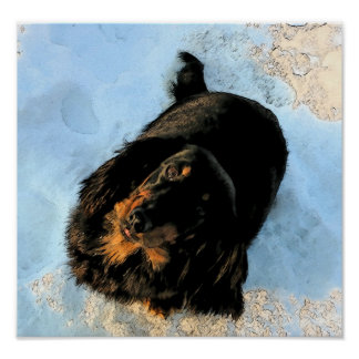 Dachshund in Snow Artistic  Poster