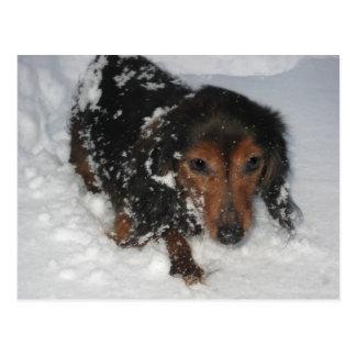 Dachshund in the Snow Postcard