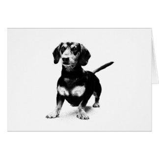 Dachshund Ink Drawing Cards