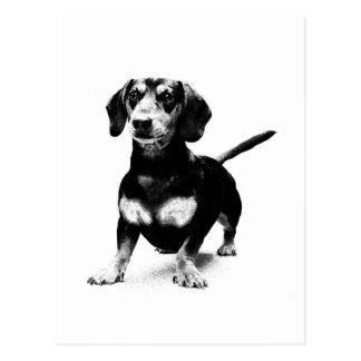 Dachshund Ink Drawing Post Cards
