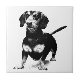 Dachshund Ink Drawing Tiles