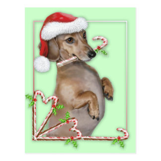 Dachshund Lilly's Candy Canes Post Cards
