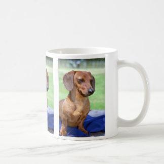 Dachshund liso miniatura taza de café