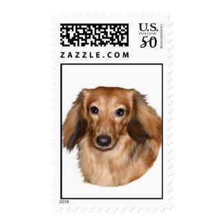 Dachshund, long hair, stamp