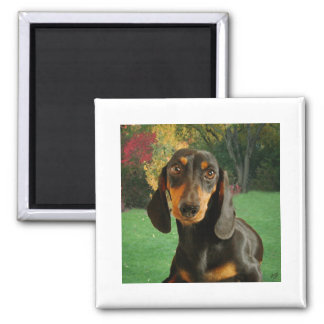 Dachshund ( Mini Brown Short Haired ) In Nature 2 Inch Square Magnet