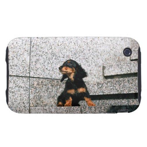 Dachshund miniatura 4 iPhone 3 tough fundas
