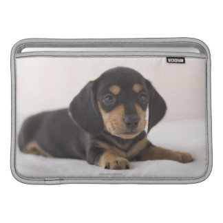 Dachshund miniatura fundas MacBook