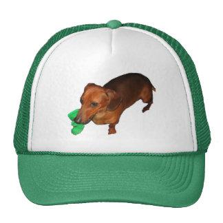 Dachshund miniatura gorras de camionero