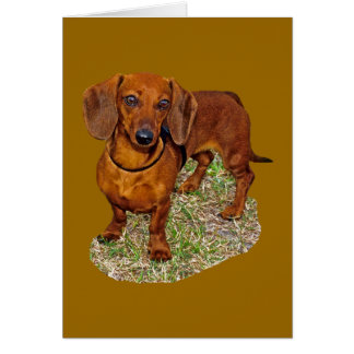 Dachshund Miniature Gift Greeting Cards