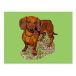 Dachshund Miniature Gift Post Cards