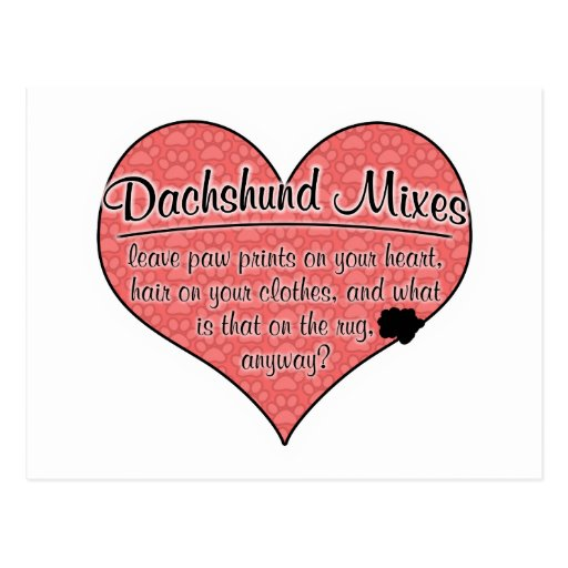Dachshund Mixes Paw Prints Dog Humor Postcard
