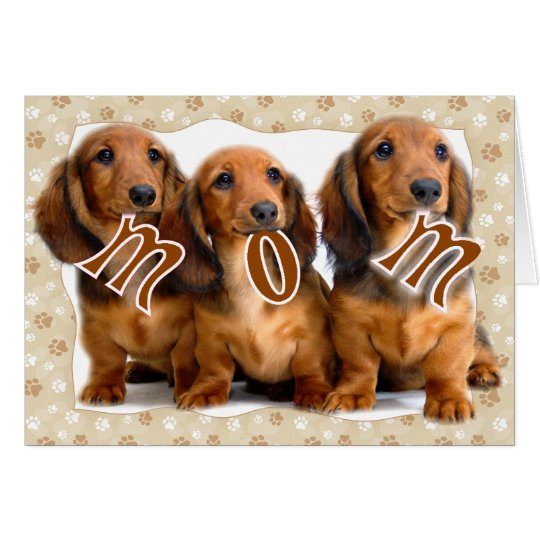 Image Result For Dachshund Meme