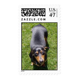Dachshund Postage Stamp - Customized