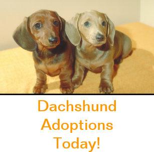 Adopt Puppy Posters & Photo Prints | Zazzle