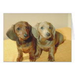 Dachshund Puppies Greeting Cards