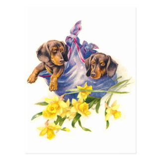 Dachshund Puppies in Blanket with Daffodils Postcard