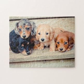 Dachshund Puppies Jigsaw Puzzle