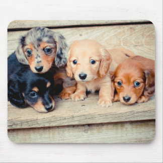 Dachshund Puppies Mouse Pad