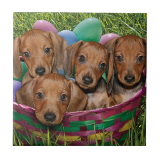 Dachshund Puppies Small Square Tile