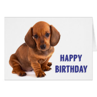 Dachshund Puppy Birthday Card